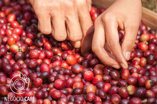 Melhor café da Colômbia é um Gesha Natural